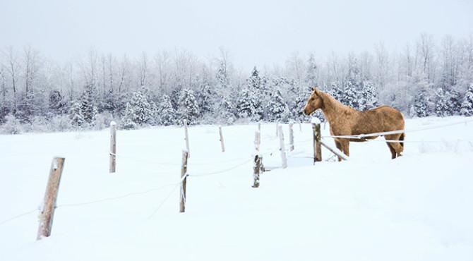 andromede10 670x370 - Faire du cheval dans la neige au Québec !