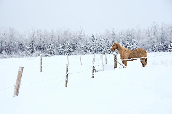 andromede10 - Faire du cheval dans la neige au Québec !