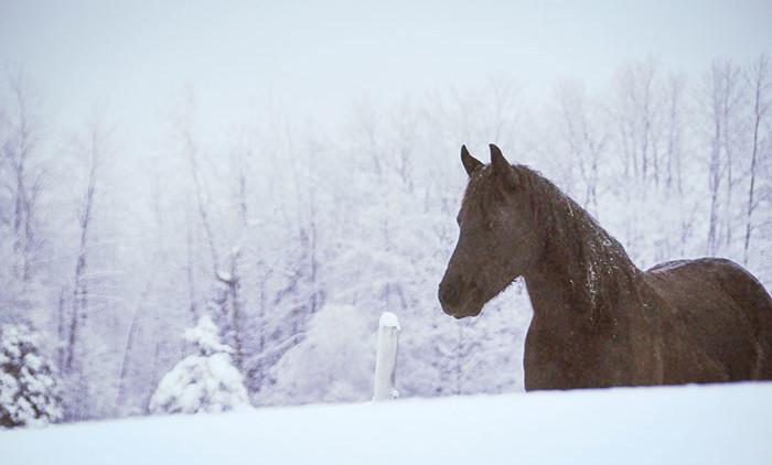 Equitation Québec: Auberge Andromede 3
