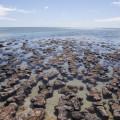 stromatolithes 120x120 - Petits colibris : Agir pour sa cause