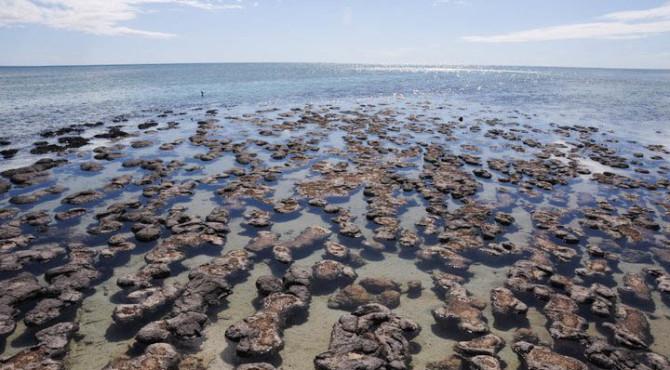 stromatolithes 670x370 - Petits colibris : Agir pour sa cause