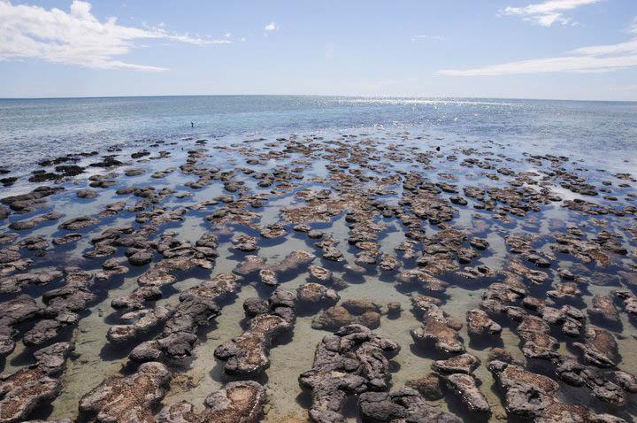 stromatolithes - Petits colibris : Agir pour sa cause
