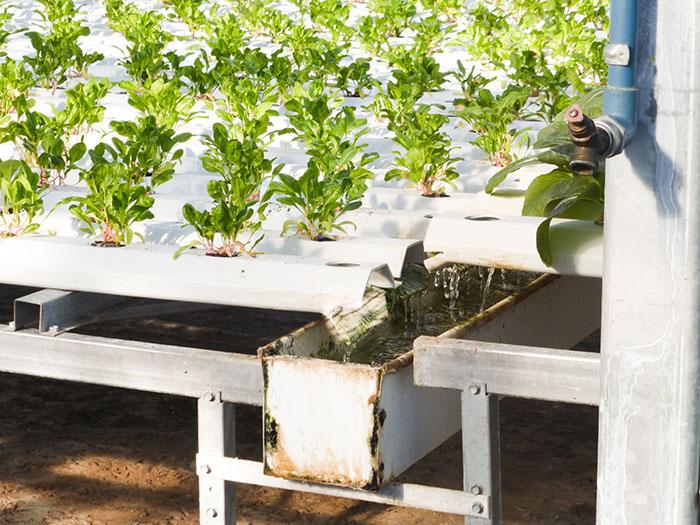 Agriculture urbaine: Lufa Farms
