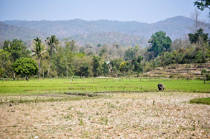 Budget Tour du monde: Chiang Mai