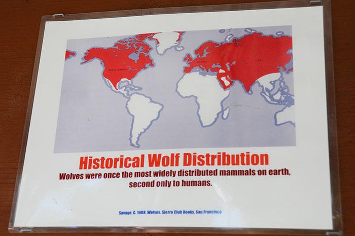 Loup Gris : distribution avant