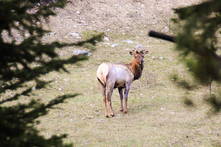 Les rocheuses : Vallée de la Bow