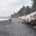 Forêt olympique seattle plage