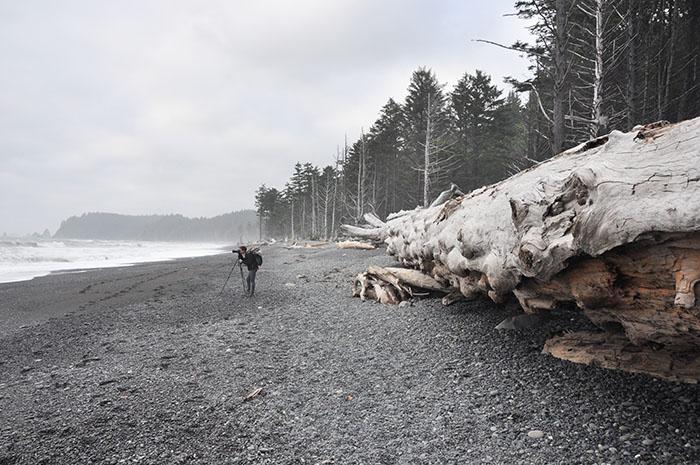 20140604 Forêt olympique seattle 005 - Entre forêt et ocean : la nature à l'état brut