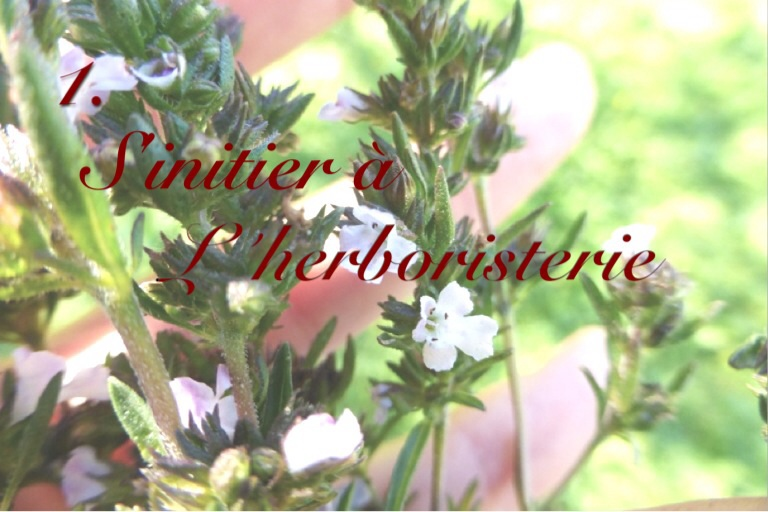 image - {Mission n°1} S'initier à l'herboristerie
