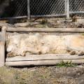20140520 Rocheuses et Vancouver 187 120x120 - Conservation du loup gris au Canada