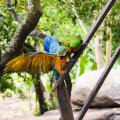 20150605 Palomino 034 120x120 - Beautés colombiennes et parc Tayrona