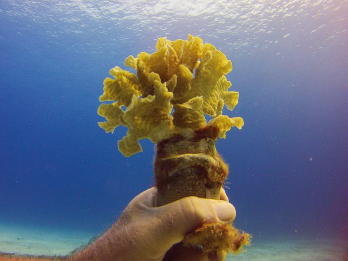 20150709-coral-004