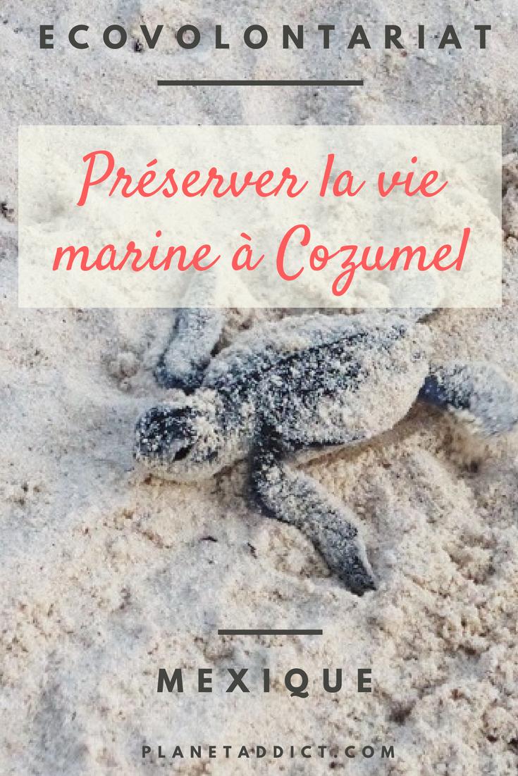 Pinterest-vie marine