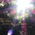 Top flop 120x120 - Les tops et les flops de mes aventures écolos