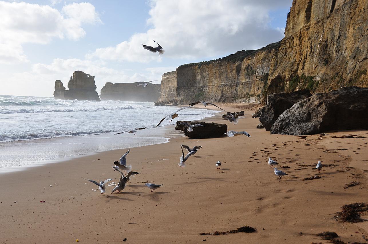 Great Ocean Road 2 19 - Retour sur voyage (2011) : 3 Road Trip à ne pas manquer en Australie