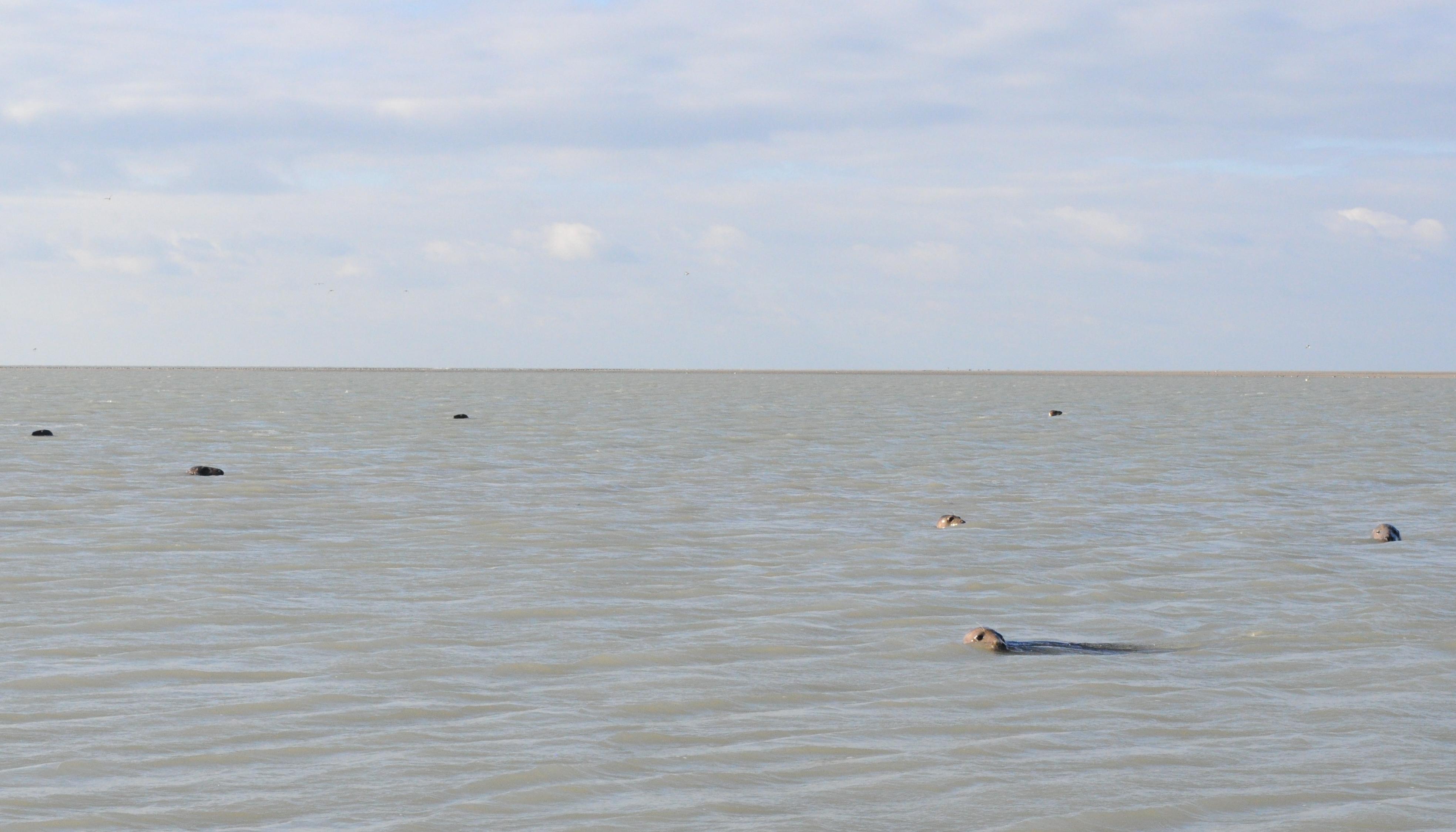 DSC 0873 - Que faire en Baie de Somme ?