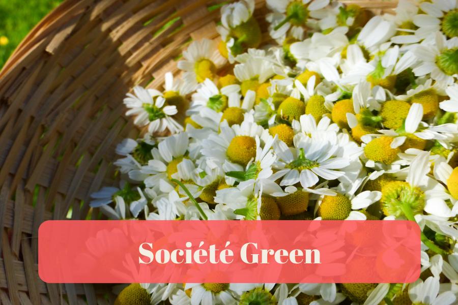 Société green - Éco-Consommation